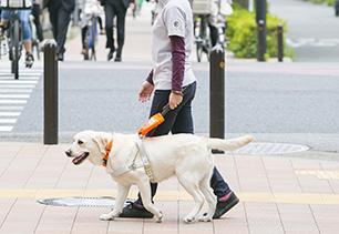 盲導犬は基本的には、人の左側を歩きます